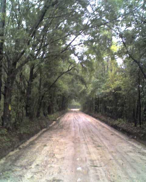 Canopy Roads of South Georgia & tropical storm Fay   Canopy Roads of South Georgia