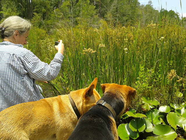 Gretchen, Yellow Dog, Brown Dog, and the floating meadow