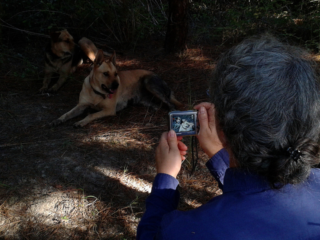 Picture of Gretchen taking a picture of dogs.
