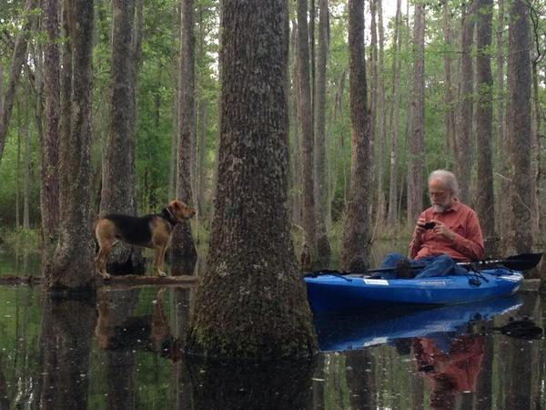 600x450 Brown Dog on a floating log and jsq in a kayak, in Dogs in the Swamp, by Gretchen Quarterman, for Okra Paradise Farms, 11 April 2014