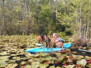 300x225 Crowded in there!, in Two dogs in a small kayak, by John S. Quarterman, for Okra Paradise Farms, 29 May 2014