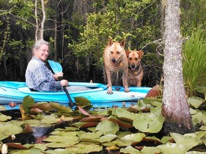 300x225 And Brown Dog, in Two dogs in a small kayak, by John S. Quarterman, for Okra Paradise Farms, 29 May 2014
