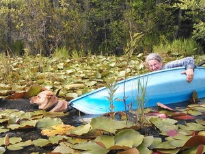 300x225 Oops!, in Two dogs in a small kayak, by John S. Quarterman, for Okra Paradise Farms, 29 May 2014