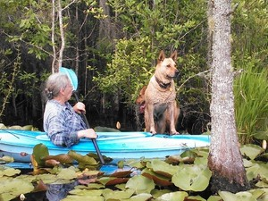 300x225 Who wants to get in?, in Two dogs in a small kayak, by John S. Quarterman, for Okra Paradise Farms, 29 May 2014