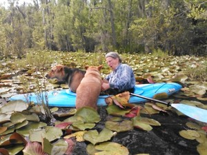 300x225 Then Yellow Dog wanted in, too, in Two dogs in a small kayak, by John S. Quarterman, for Okra Paradise Farms, 29 May 2014