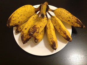 300x224 Ripe bananas, in Minor food crops to consider for the hobby gardener or small scale farmer, by Bret Wagenhorst, for OkraParadiseFarms.org, 14 December 2014