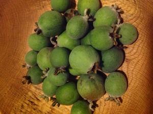 300x224 Feijoa fruit in bowl, in Minor food crops to consider for the hobby gardener or small scale farmer, by Bret Wagenhorst, for OkraParadiseFarms.org, 14 December 2014