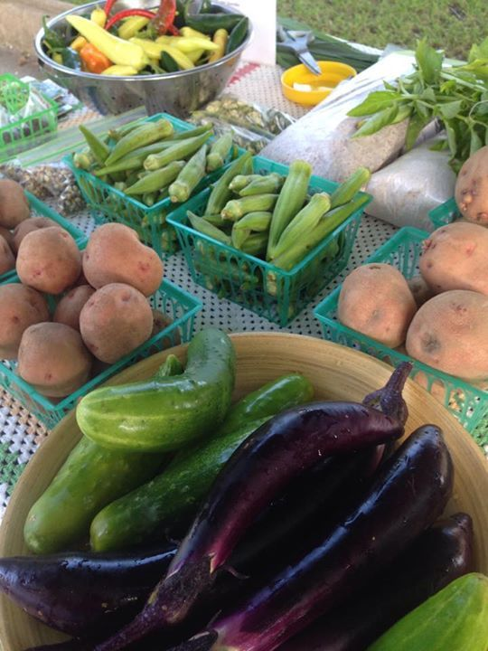 540x720 Okra, cucumbers, peppers, basil, in At the market, by Gretchen Quarterman, for OkraParadiseFarms.com, 27 June 2015