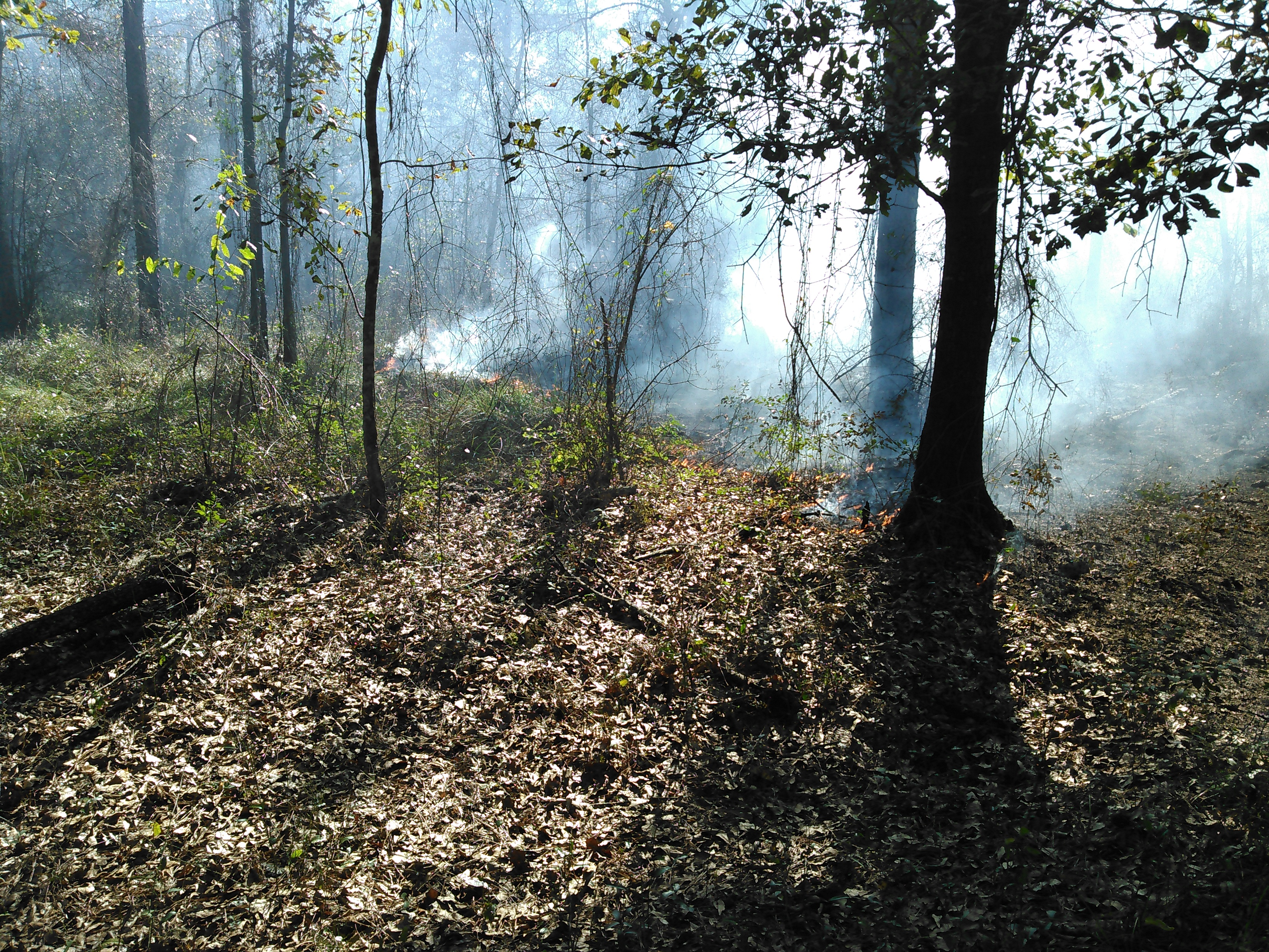 3264x2448 Diagonal fire, in Prescribed burn, by John S. Quarterman, for OkraParadiseFarms.com, 5 December 2015