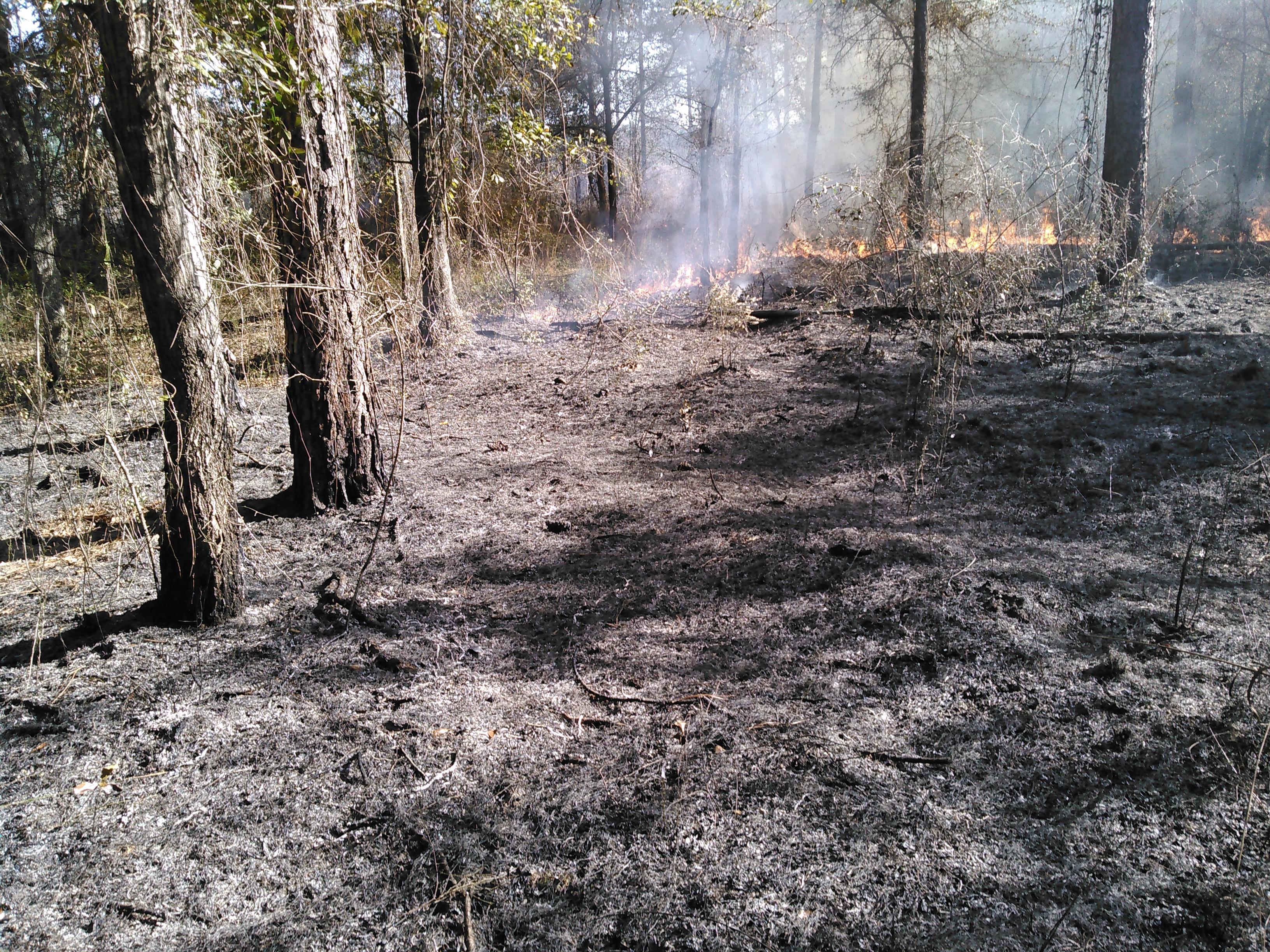 3264x2448 Wiregrass will come back soon, in Prescribed burn, by John S. Quarterman, for OkraParadiseFarms.com, 5 December 2015