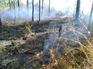 Grass near, pinestraw there, burning