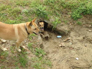 Doggie fort!