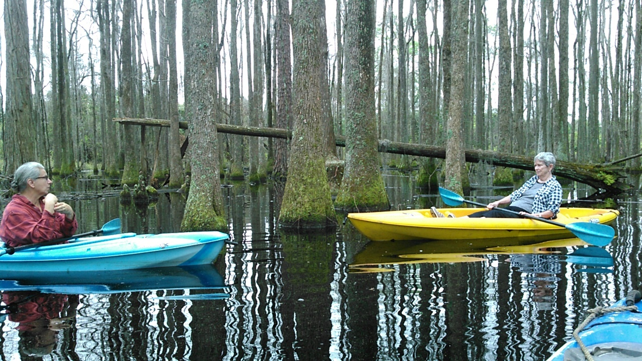 1280x720 Do tell, in Betty Marini in the Cypress Swamp, by John S. Quarterman, 18 March 2016