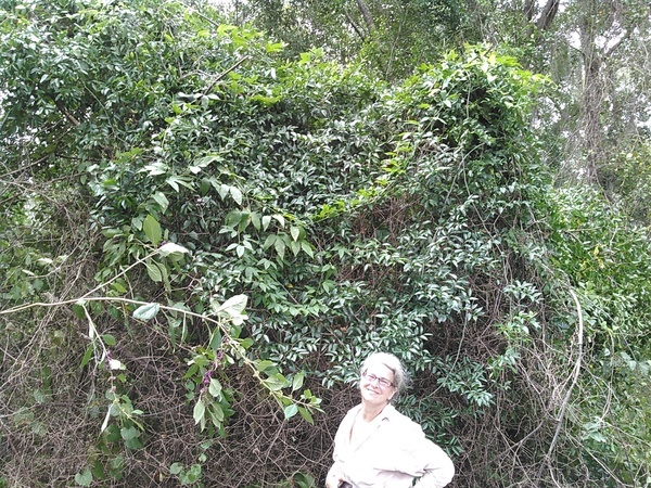 Gretchen with passion flower on top of smilax vine