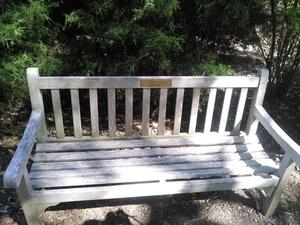 Bench under cedar trees