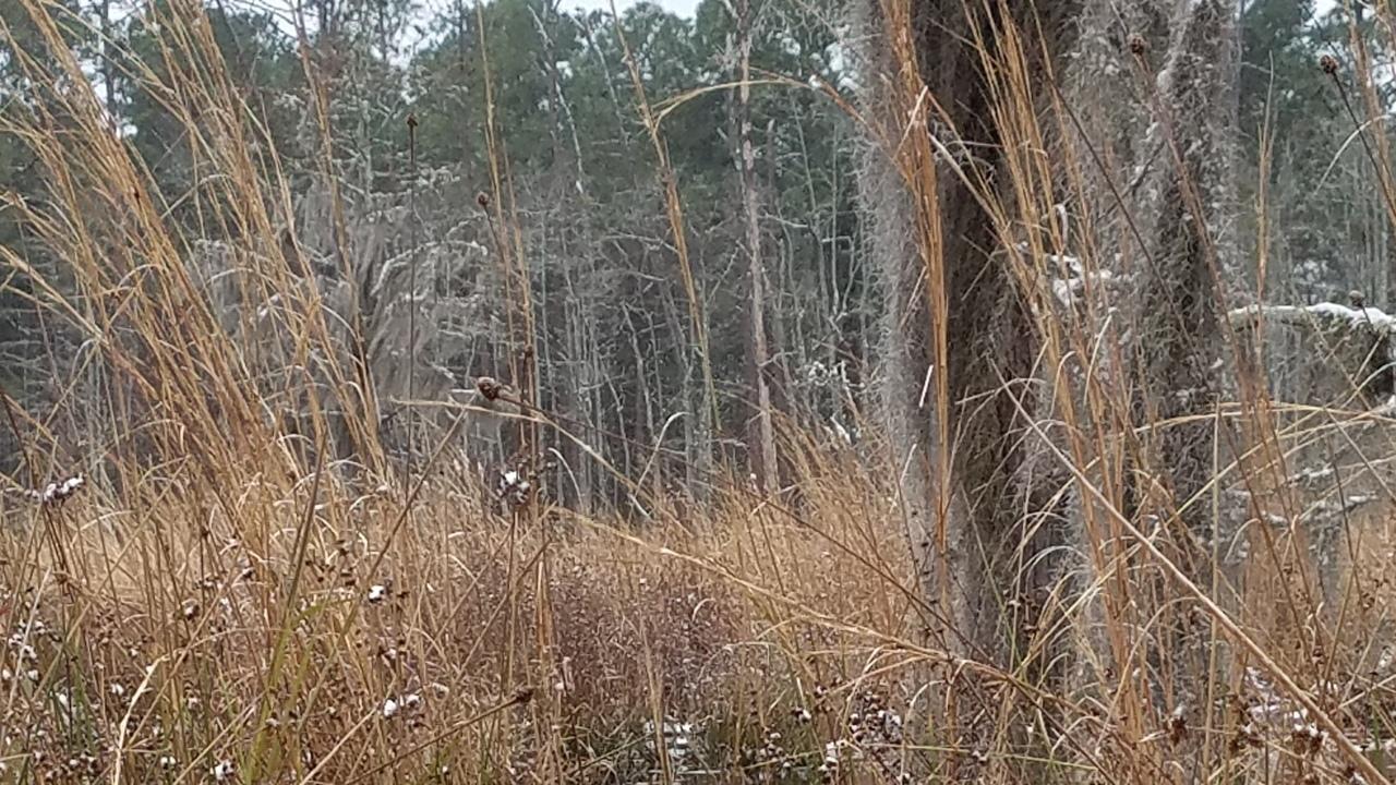 1280x720 Grass, Floating bottom, in Icy Pond, by John S. Quarterman, for OkraParadiseFarms.com, 3 January 2018