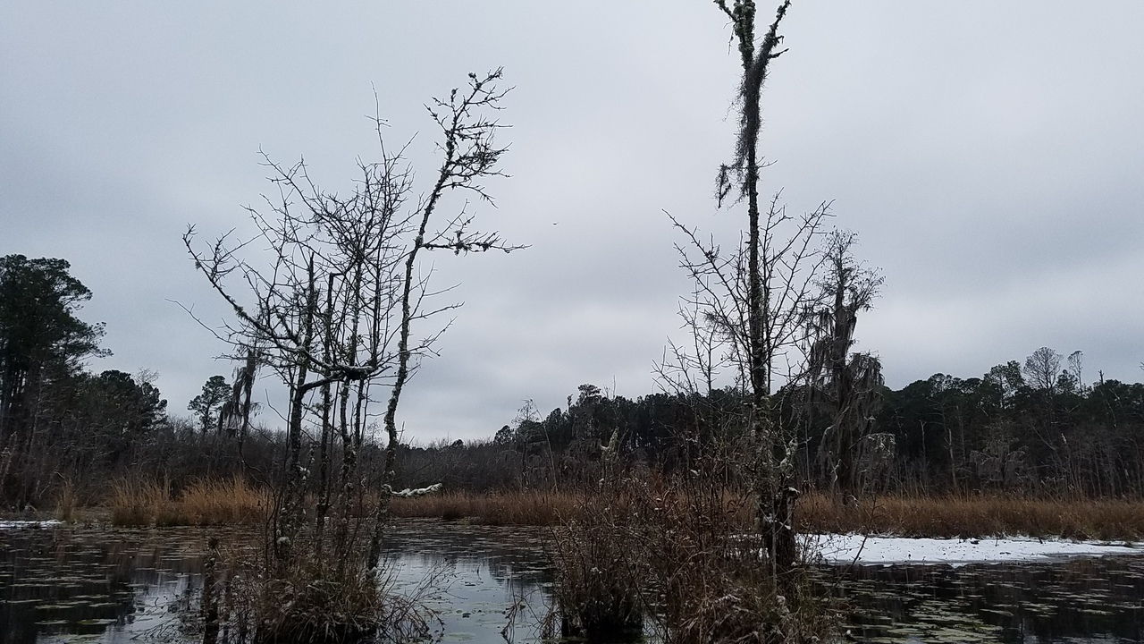 1280x720 Tree limbs, Floating bottom, in Icy Pond, by John S. Quarterman, for OkraParadiseFarms.com, 3 January 2018