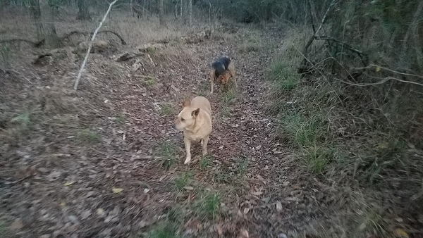 In their habitat, Dogs