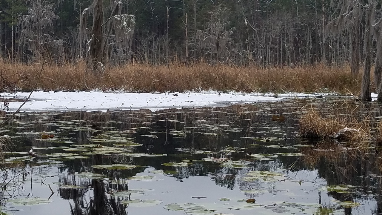 1280x720 Ice on top, Floating bottom, in Icy Pond, by John S. Quarterman, for OkraParadiseFarms.com, 3 January 2018