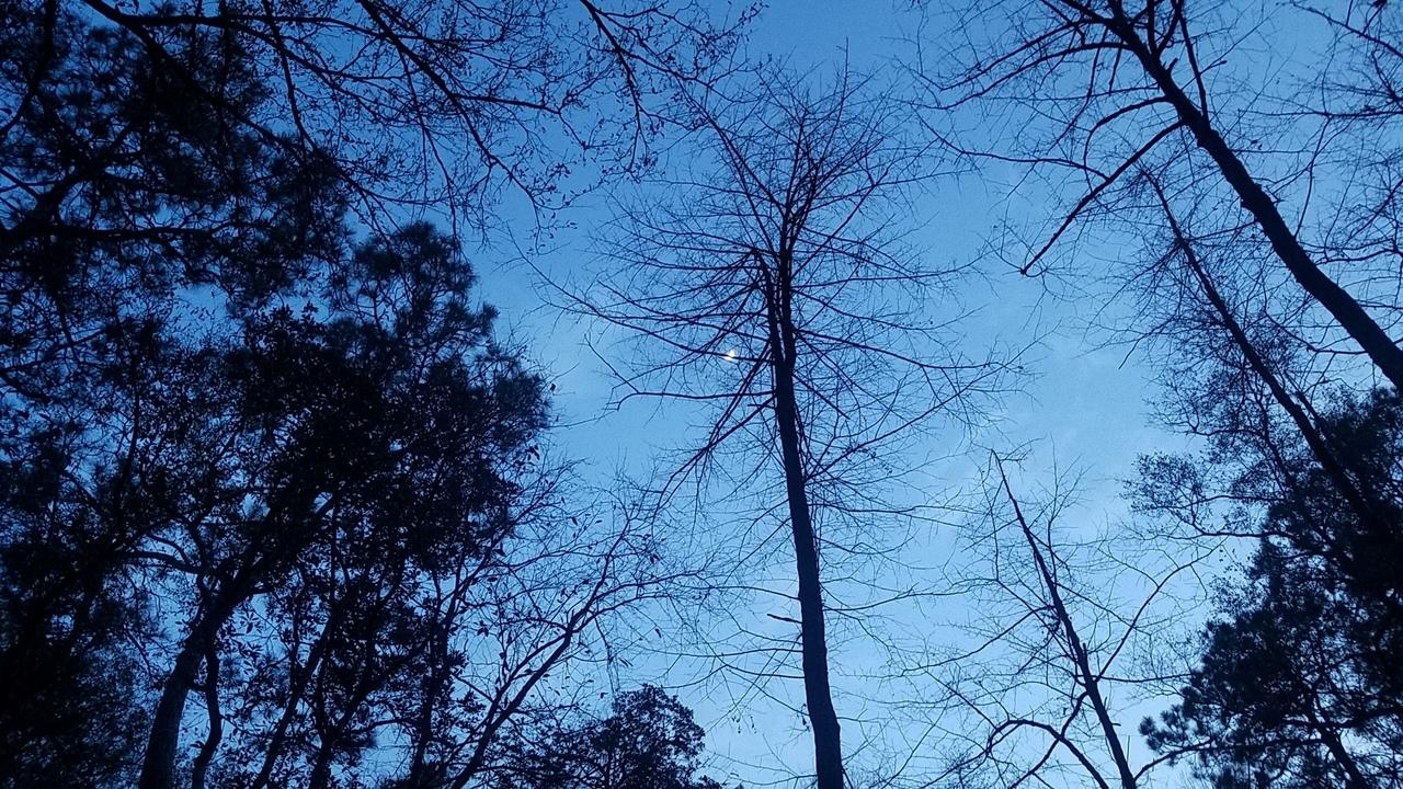 1280x720 Moon sky, Sundown, in Pond with dogs at dusk, by John S. Quarterman, for OkraParadiseFarms.com, 22 January 2018