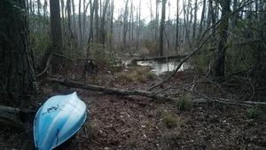 Beaver log over water, Pond