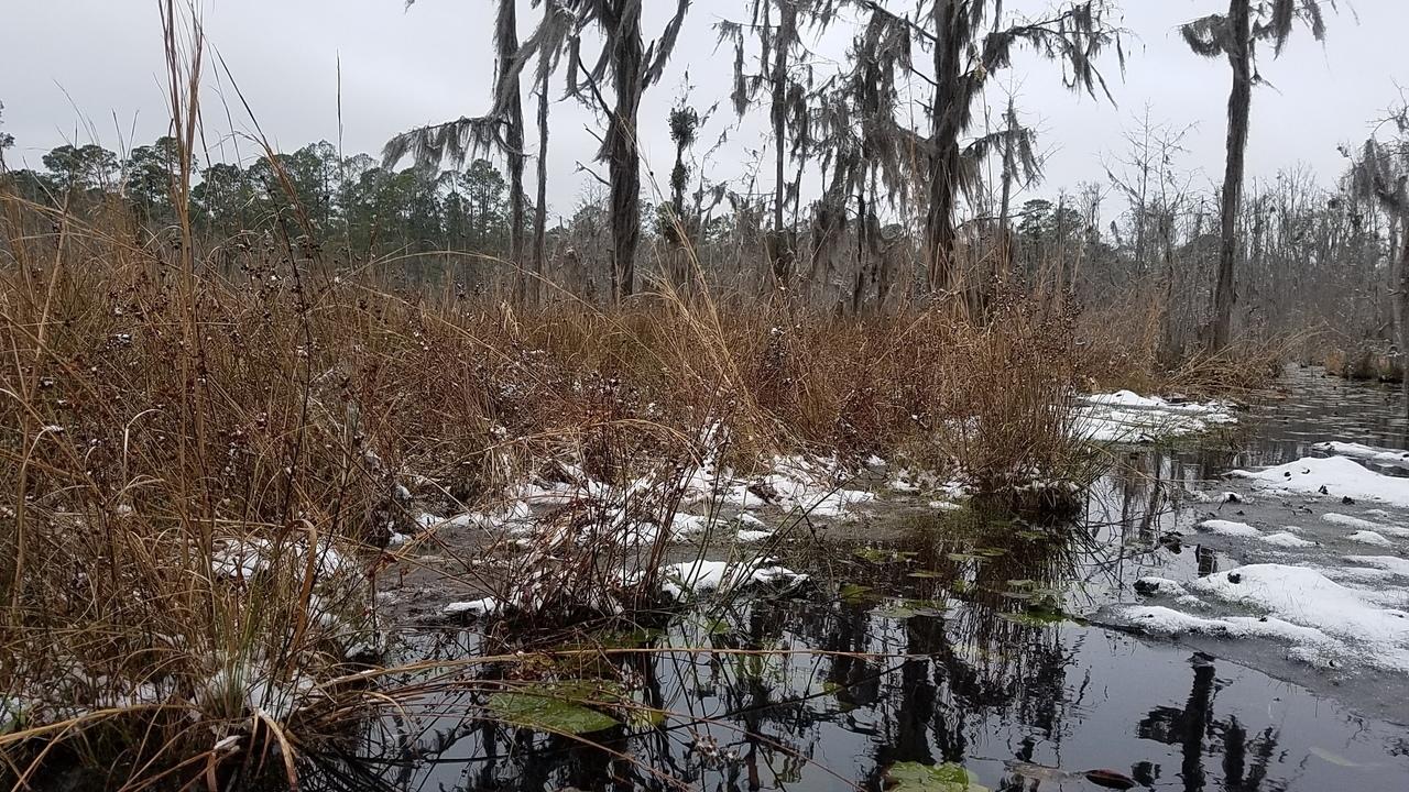 1280x720 Siberia, Floating bottom, in Icy Pond, by John S. Quarterman, for OkraParadiseFarms.com, 3 January 2018
