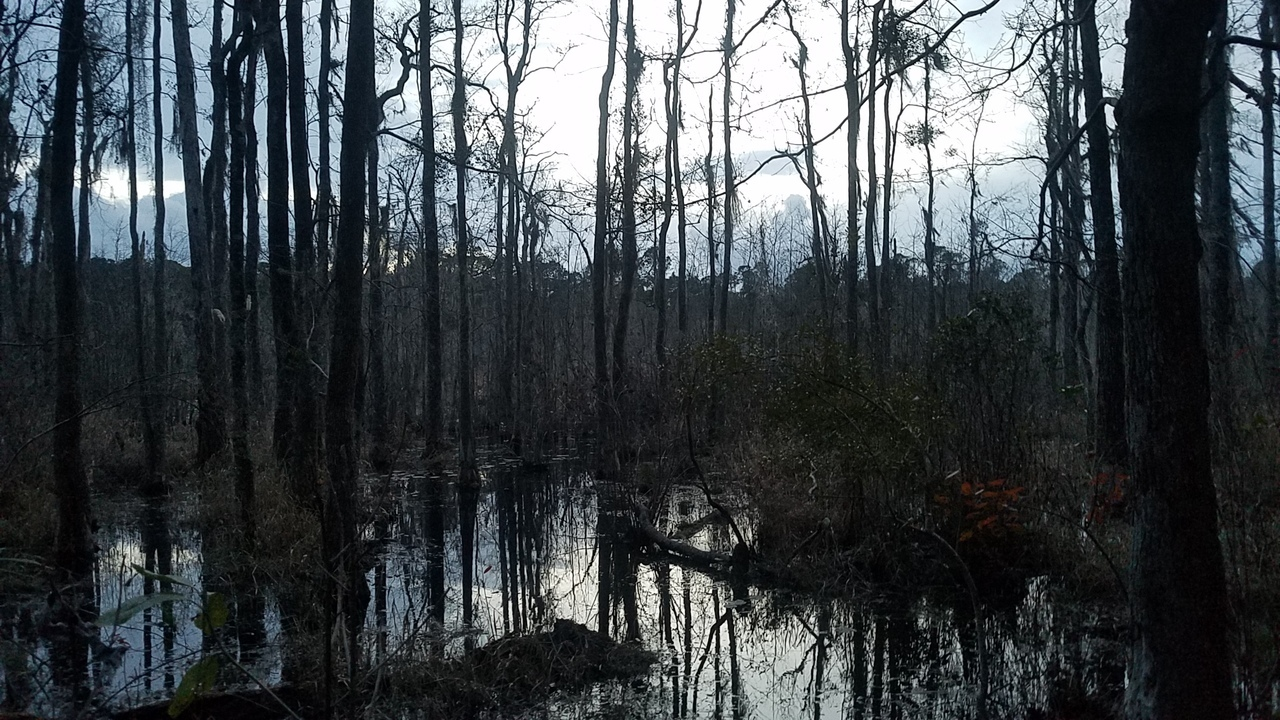 1280x720 Pond swamp, Pond, in Pond with dogs at dusk, by John S. Quarterman, for OkraParadiseFarms.com, 22 January 2018
