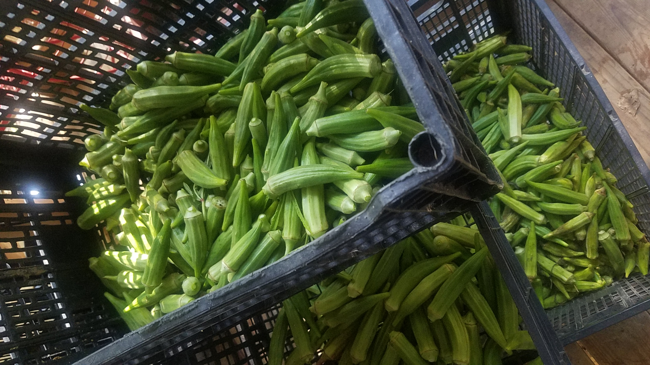 2560x1440 Today and previous day, Crates, in Fresh okra, by John S. Quarterman, for OkraParadiseFarms.com, 10 August 2018