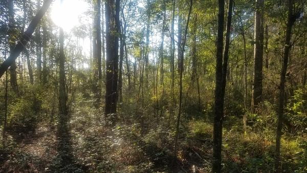 Setting sun, Woods