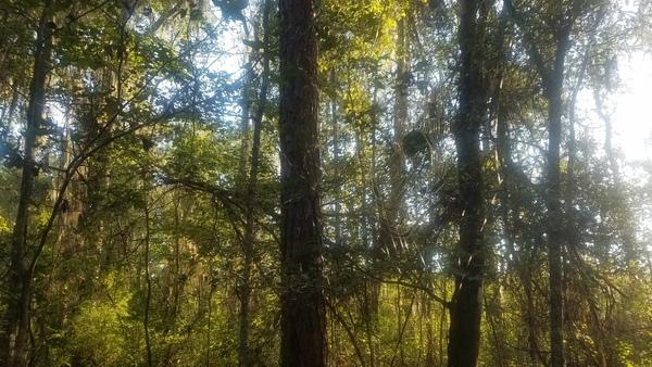 Spiderweb, Woods