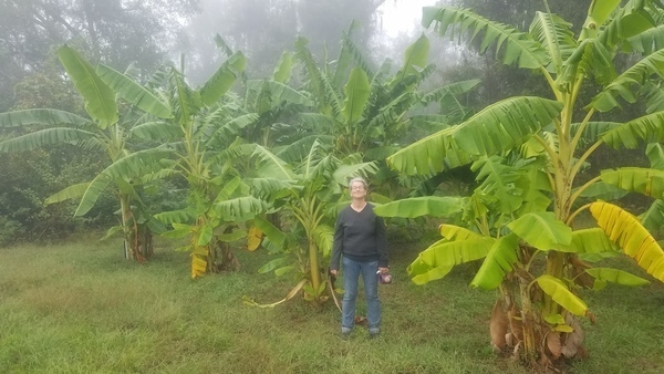 Banana Forest, Steamy