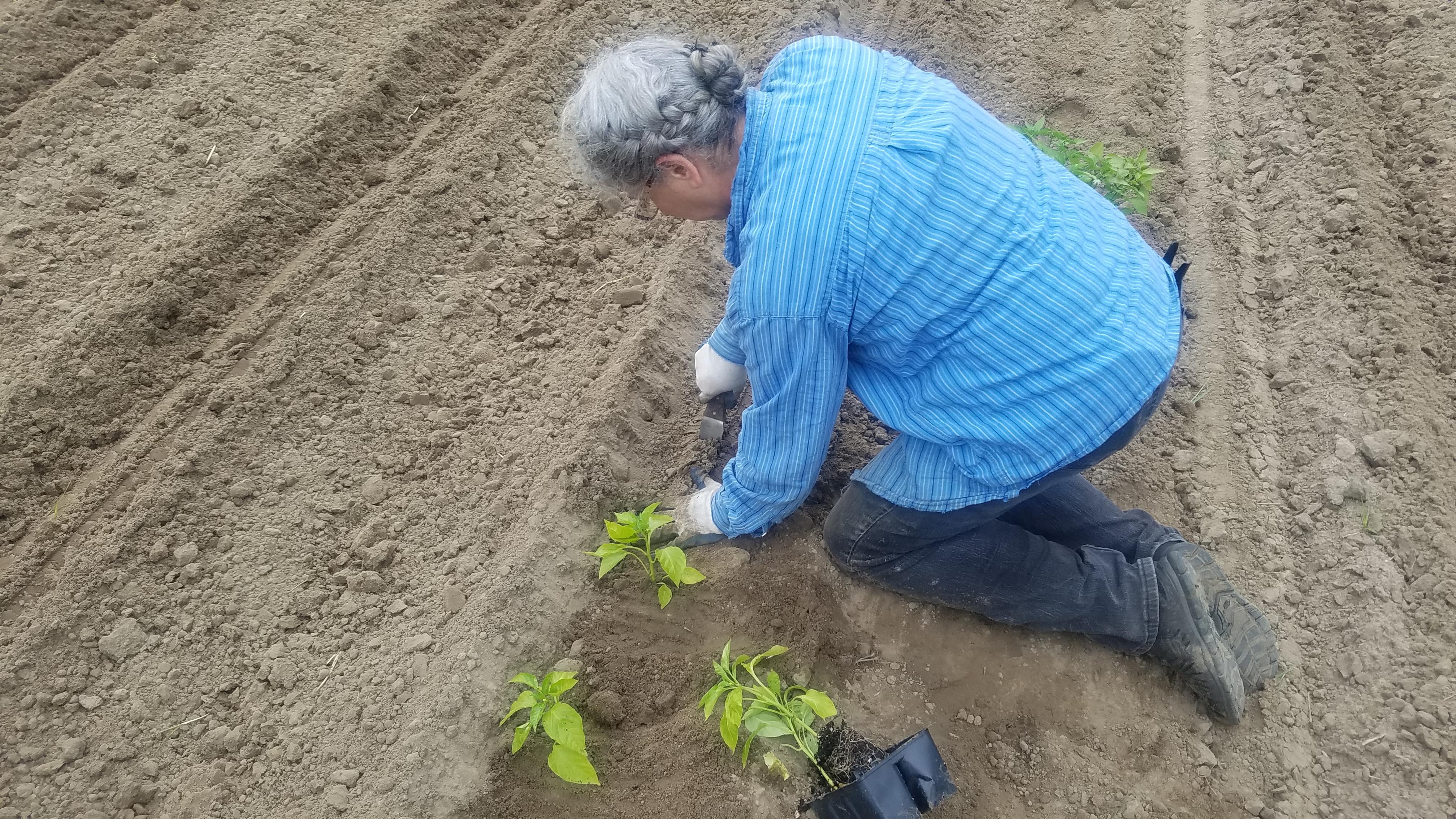 4032x2268 Dig next hole, Planting, in Planting Garden, by John S. Quarterman, for OkraParadise.com, 8 April 2019