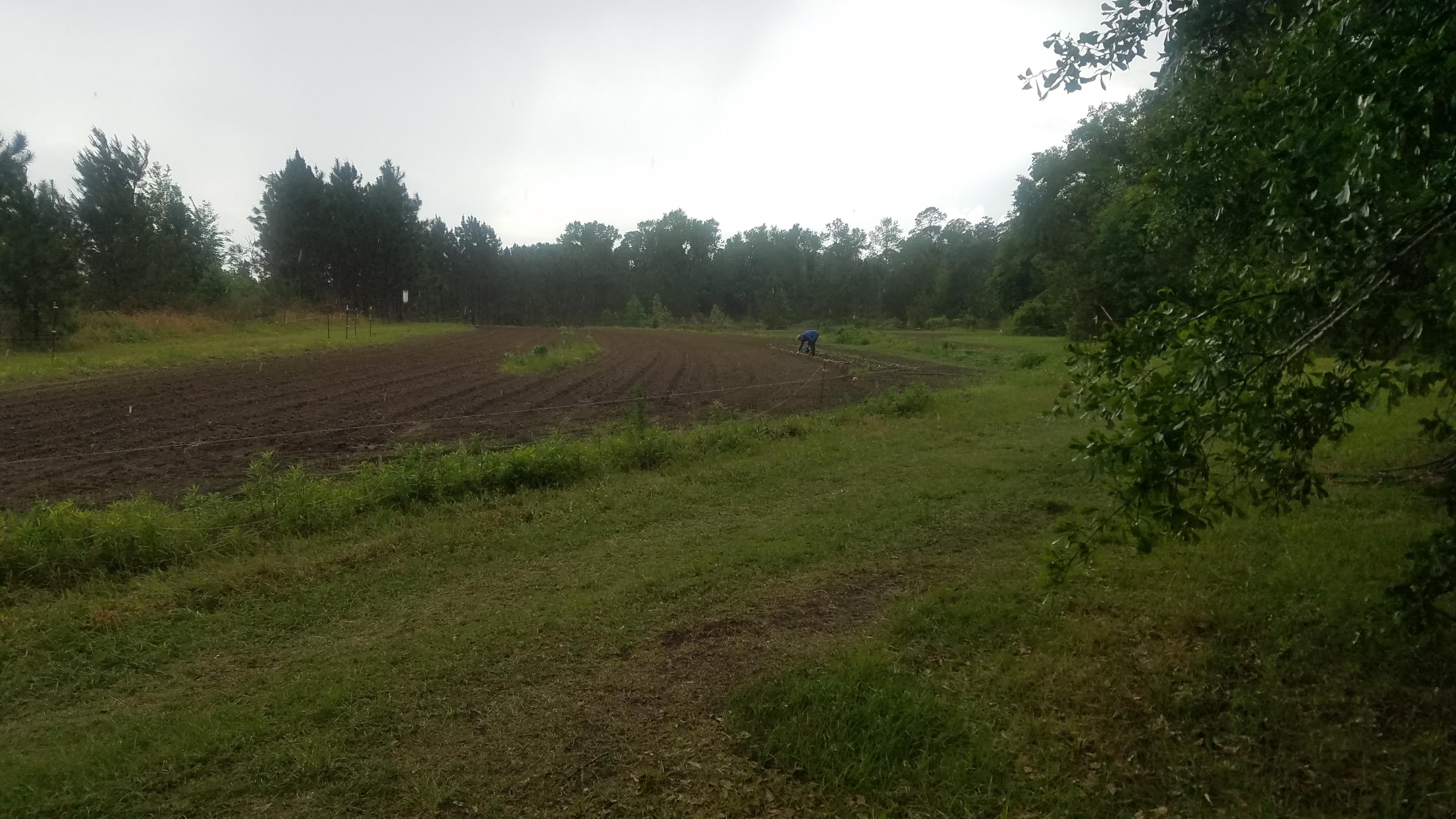 4032x2268 Precise application, Rain, in Planting Garden, by John S. Quarterman, for OkraParadise.com, 8 April 2019
