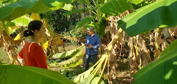 What about that one?, In the banana trees