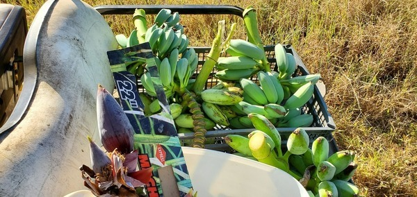 Flowers and bananas, On the cart