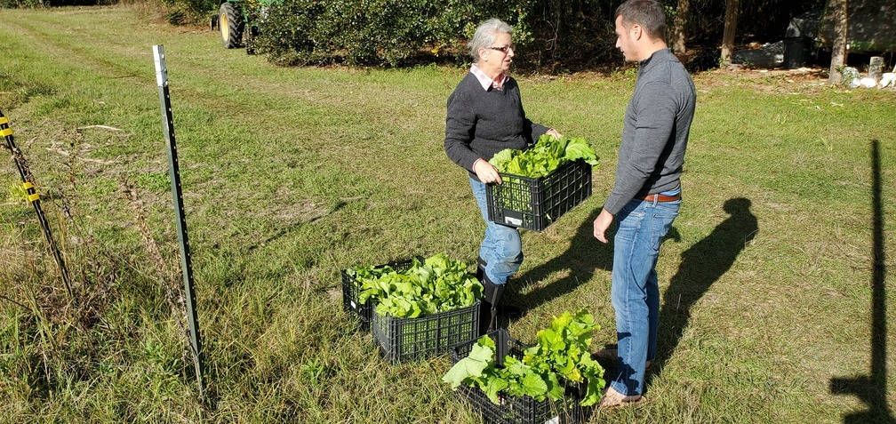 1008x477 Gretchen hands them over, Boxes of mustard greens, in Greens and grits for 401 West Restaurant, by John S. Quarterman, for OkraParadiseFarms.com, 22 November 2019
