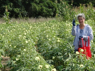 Gretchen picking okra at Okra Paradise Farms