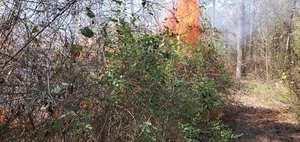 [Movie: Sparks jumping firebreak (104M)]