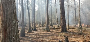 [Cypress knees and fire]
