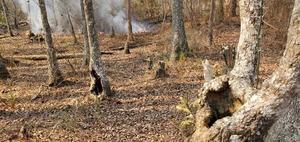 [Fire approaching water in tree]