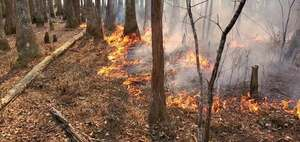 [Movie: Fire in swamp (24M)]