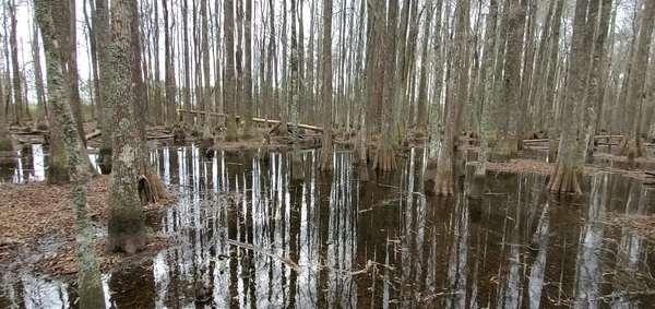[Movie: Around the swamp (21M)]