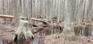 [Swamp throne]