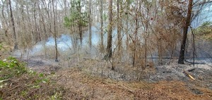 [From the older firebreak to the swamp]