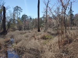 [Beaver pond]
