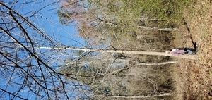 [Tall tree]