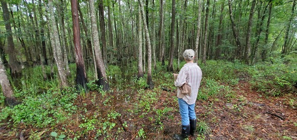 [Cypress swamp pretty full]